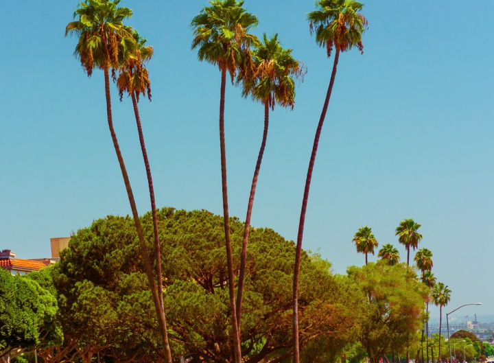 Photo: Flavia Caldas // Location: Sunset Boulevard